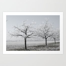 Winter Trees With Red Splash Art Print