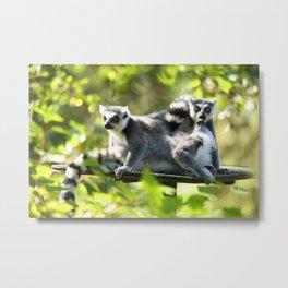 Funny Lemurs of Madagascar Monkey Business Metal Print