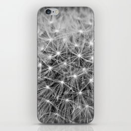 Dandelion flower head composed of numerous small florets iPhone Skin