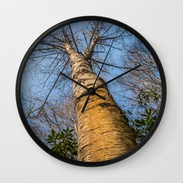 Looking up through the tree branches Wall Clock