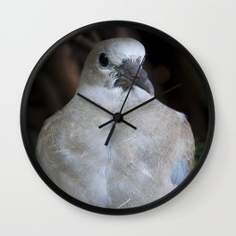Baby Collared Dove #2 Wall Clock