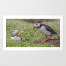 Looking down a Puffin's hole Art Print