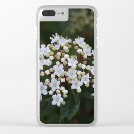 Viburnum tinus flowers and buds Clear iPhone Case