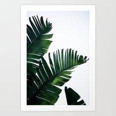 Palm Leaves 16 Art Print