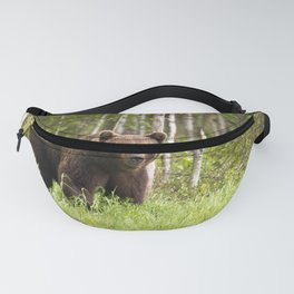 Amazing Huge Adult Grizzly Bear Strolling Proudly Across Wood Clearing Ultra HD Fanny Pack