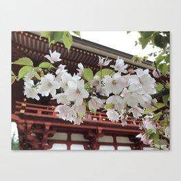 Sakura on Koya-san Canvas Print
