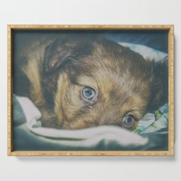 Brown puppy with blue eyes Serving Tray