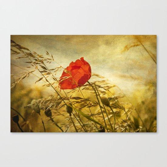 paint a poppy Canvas Print