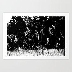Black White Nature Art Print