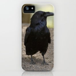 Raven - Yellowstone National Park, Wyoming iPhone Case