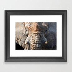 African Elephant 1 Framed Art Print