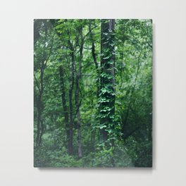 A Tree Grows in the Woods Metal Print