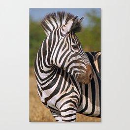 Look back - Zebra, wildlife in Africa Canvas Print