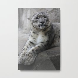 """Picture Day"" Snow Leopard Metal Print"