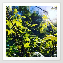 sunshine through leaves Art Print