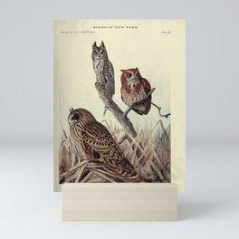 Short-eared Owl, Screech Owl15 Mini Art Print