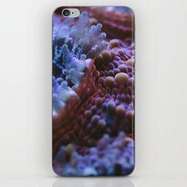 Acanthastrea Echinata Macro iPhone Skin