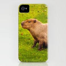 Capybara iPhone (4, 4s) Slim Case