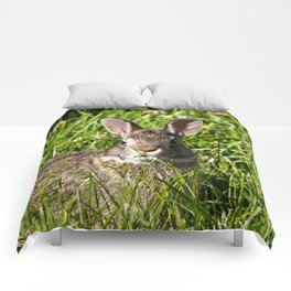 Young Cottontail Rabbit Comforters