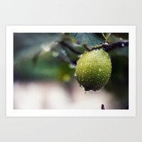 lime Art Prints featuring lime by JOERGOTTO