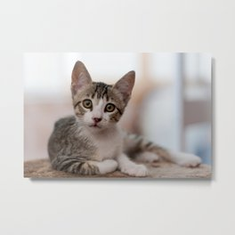 I'm Sexy and I know it! Metal Print
