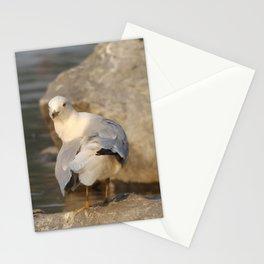 Gull Stationery Cards