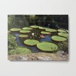 Giant Lily Pads Metal Print