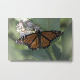 Monarch Butterfly XII Metal Print