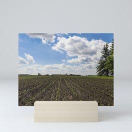 Corn Field 1 Mini Art Print