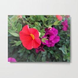 Calibrachoa Flowers 2 Metal Print