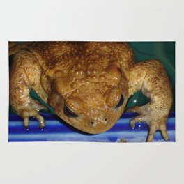 Bufo Bufo Clinging To The Edge Of A Swimming Pool Rug