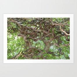 Tree maze Art Print