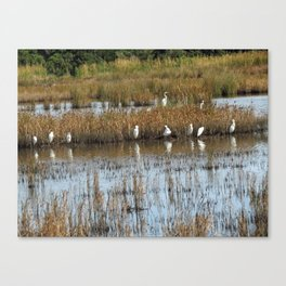White Egrets Resting and Grooming Canvas Print