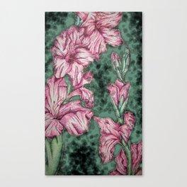 Pink Gladiolas Canvas Print