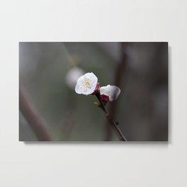 Flower PW 04 Metal Print