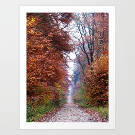 Walking in the Elm Art Print