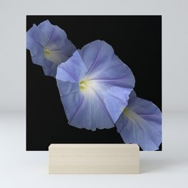 Morning Glory Illusion On Black Mini Art Print