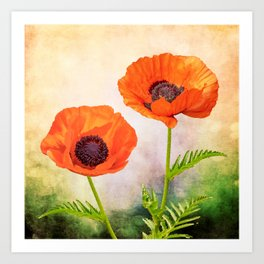 Two beautiful poppies with textures Art Print