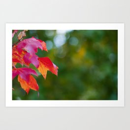 A Touch of Autumn Art Print