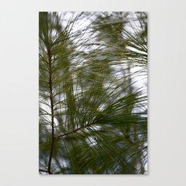 Pineland Canvas Print