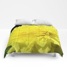 Glowing Yellow Dahlia Comforters