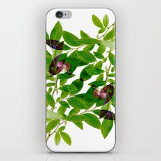 Blueberry Branch in Spring iPhone & iPod Skin