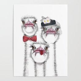 Ostrich family Poster