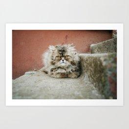 Cat On The Ledge Art Print