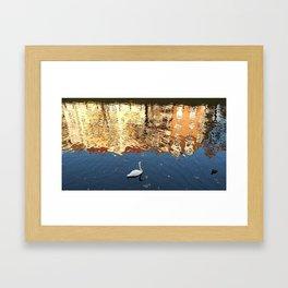 Reflector Swan II Framed Art Print