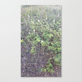flowers and thorns Canvas Print