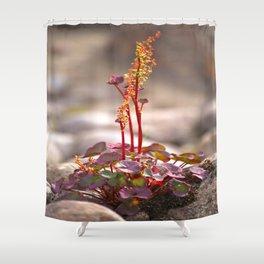 Wildflower between stones scandi landscape Shower Curtain