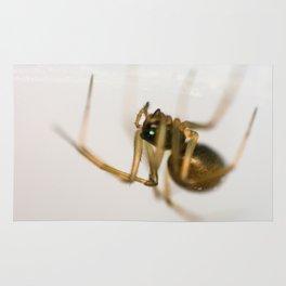 Hanging Money Spider Rug