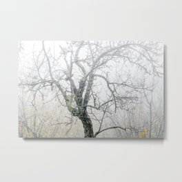 Naked tree surrounded by fog Metal Print