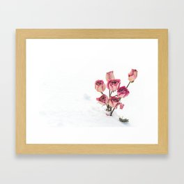 Rose in Snow Framed Art Print